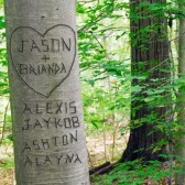 Summer Love Tree Personalized Photograph