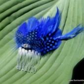 Unique Royal Blue Spotted Feather Hair Comb