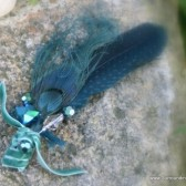 Aqua Peacock and Spotted Feather Crystal Hair Clip