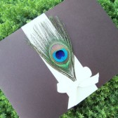 Bow Peacock Pocketfold Invitation Set