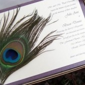Spectaular Peacock Invitation Set