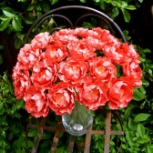 Coral Paper Flowers