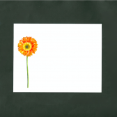 Gerber Daisies Flat Note Cards