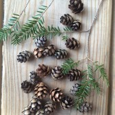 Tiny Pinecones, Rustic Wedding, Table Decor