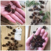 mini pinecones, woodland wedding, table scatter, pinecone wedding, confetti