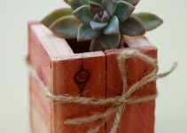 diy succulent favors