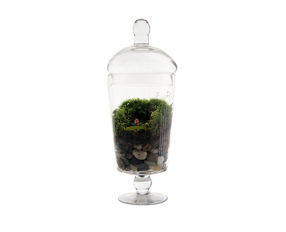 grow old with you terrarium