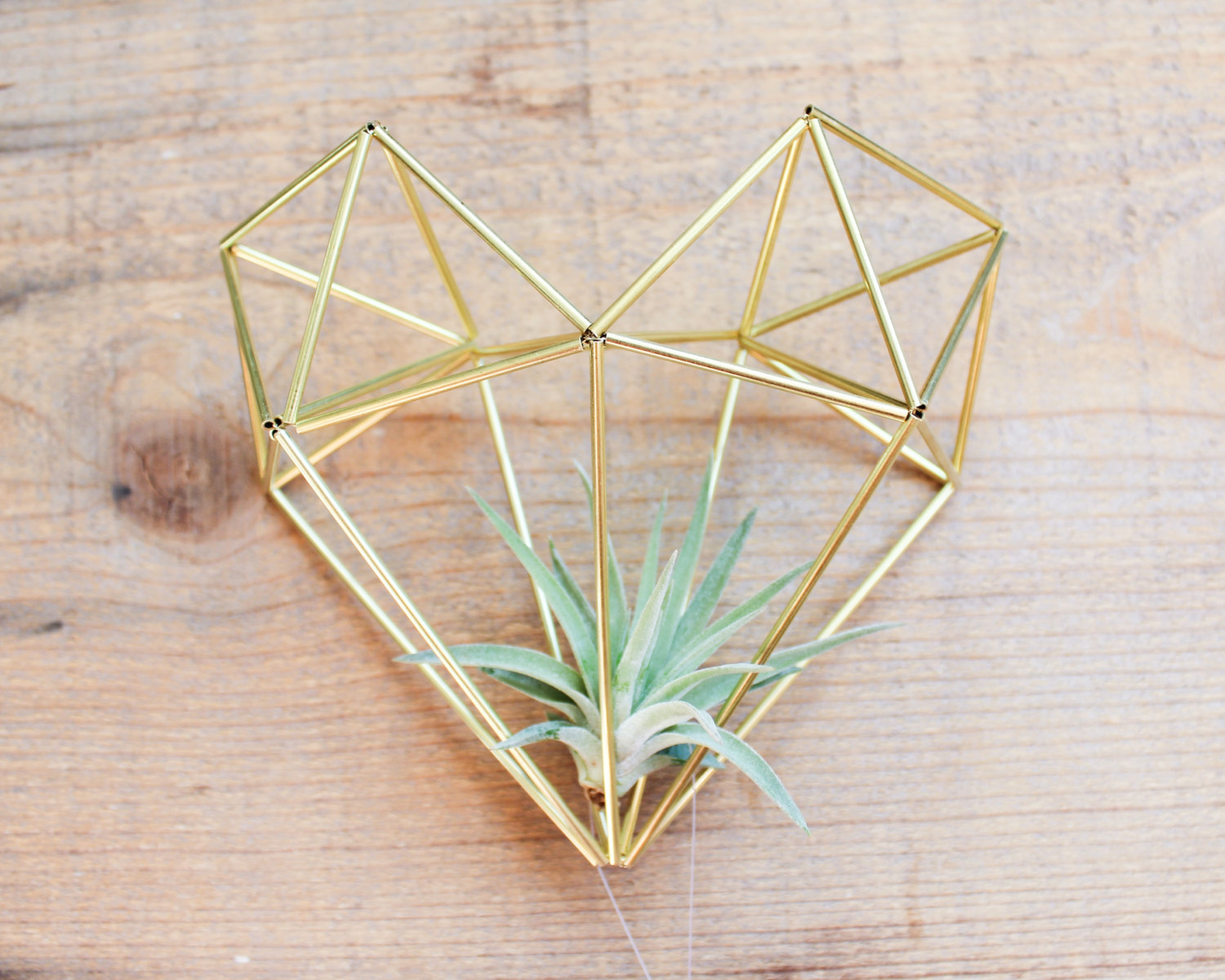 Air Plant Wedding Decor | http://emmalinebride.com/decor/air-plant-wedding-decor/