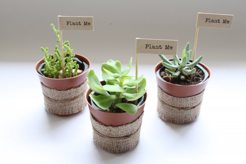 plant favors wedding