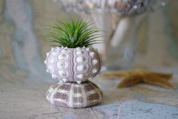 10 Beach Wedding Centerpieces via EmmalineBride.com - sea urchin air plant holder by By The Seashore