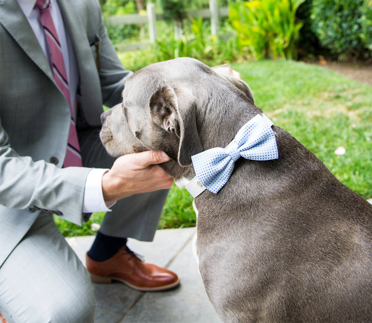 something blue dog bow tie