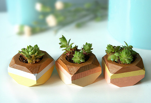 Succulent Planters for Centerpieces