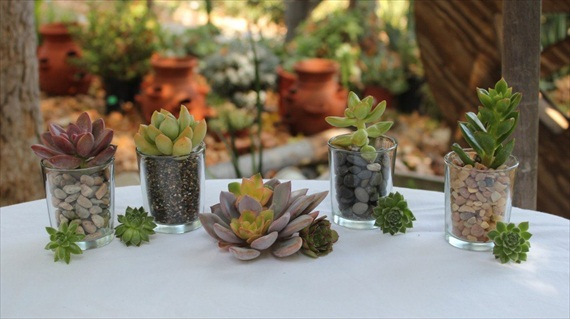 wedding favor containers clear glass votives for succulents