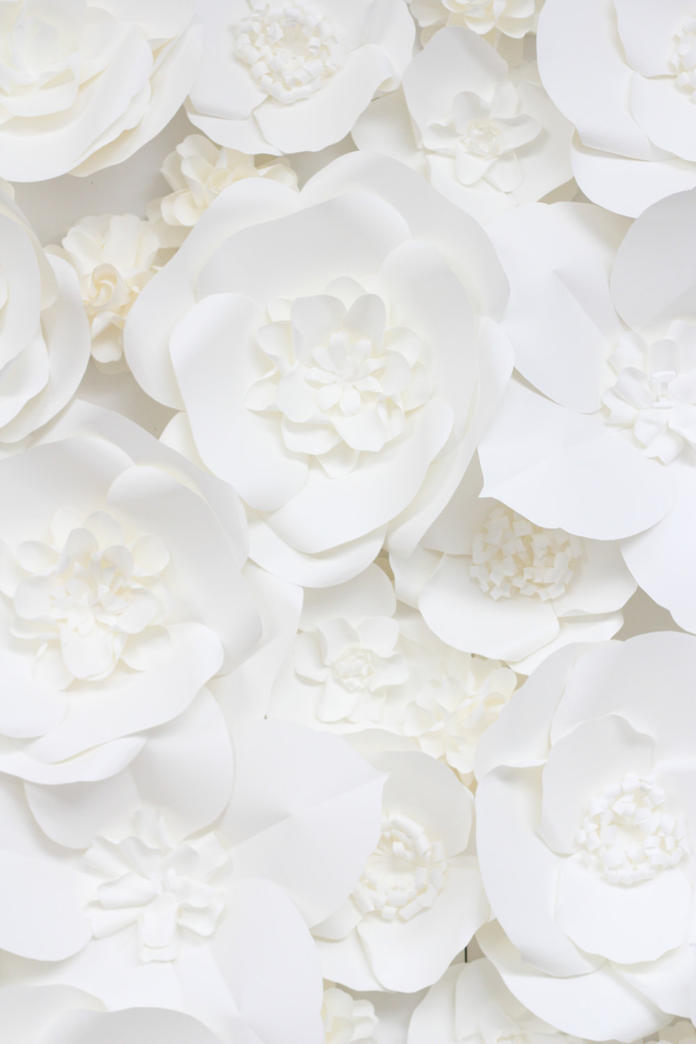 white flower backdrop